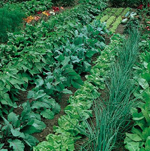 Use of crop rotation can lead to a healthier, more productive garden.