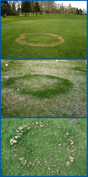 Type 1 (top), Type 2 (middle) and Type 3 (bottom) fairy rings.