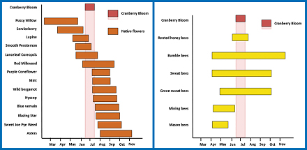 LEFT: Approximate bloom times for plants that are recommended to be grown near cranberry marshes as a supplemental nectar and pollen source for cranberry pollinators. RIGHT: Approximate flight periods for major groups of bees (including native species) found in cranberry marshes. The pink columns in both graphs represent the approximate time of cranberry bloom.